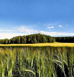 The nature of Kazakhstan - Aksu Djabagly Resort